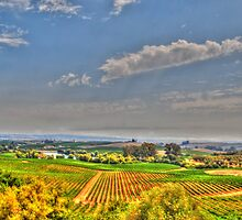 Napa Fields by Jean-Pierre Mouzon