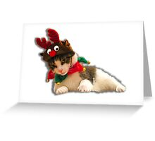 Moody cat Greeting Card