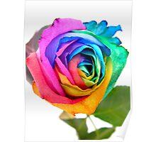 Rainbow Rose 01 Poster