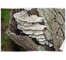 Weep No More My Baby - Bracket Fungi Poster