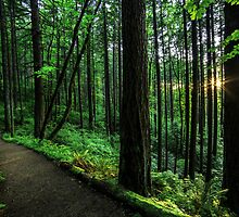 Path to Elowah by Justin Lowery