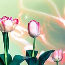 Pink Tulips Painted with Light by susan stone