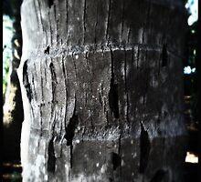 Coconut Tree by Niki Smallwood