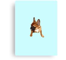 Blue French Bull Dog Canvas Print