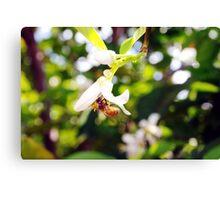 Bee heaven Canvas Print