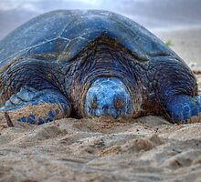 Resting Turtle by JamesA1