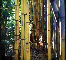 Bamboo by Niki Smallwood