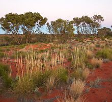 Spinifex on a Sandhill at Dawn by Richard  Windeyer