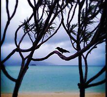 Crow by Niki Smallwood