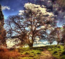 Tamar Island English Oak by Marcus Salter