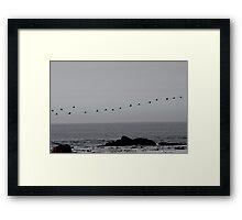 Cormorants heading home Framed Print