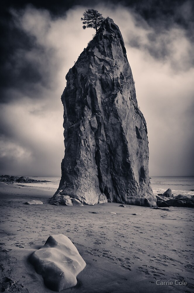 Rialto Beach Sea Stack by Carrie Cole