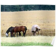 my neigh......bours horses Poster