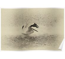 Pelican Landing in black and white Poster