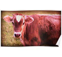Brown Jersey Cow farm decor art Poster