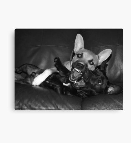 crazy dogs Canvas Print