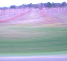 Drive-by Vineyard by triplelll