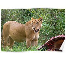 Lioness with her prey 2 Poster
