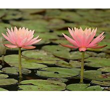 Lily Twins Photographic Print