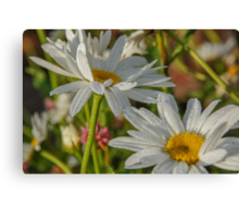 Morning Daisies Canvas Print