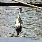 Lonely Heron by elsie