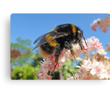Bee - A Buzzing Thing Canvas Print