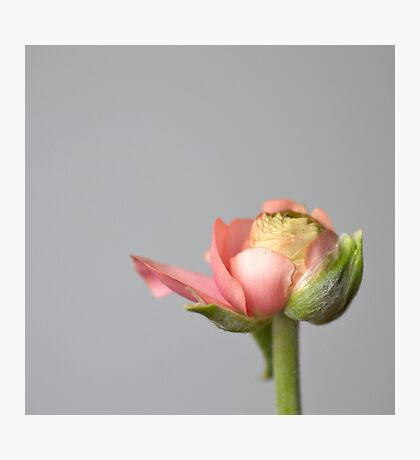 wit a flower ... Photographic Print