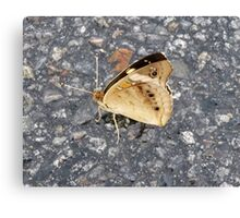 Buffy The Butterfly Canvas Print
