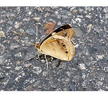 Buffy The Butterfly Photographic Print