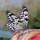 Butterfly by caitlin2005