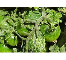 Arkansas Tomatoes Photographic Print