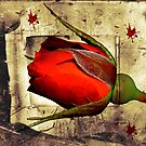 Halloween Rose by Kerry  Hill