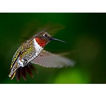 High Flight - Male Ruby-Throated Hummingbird  Photographic Print