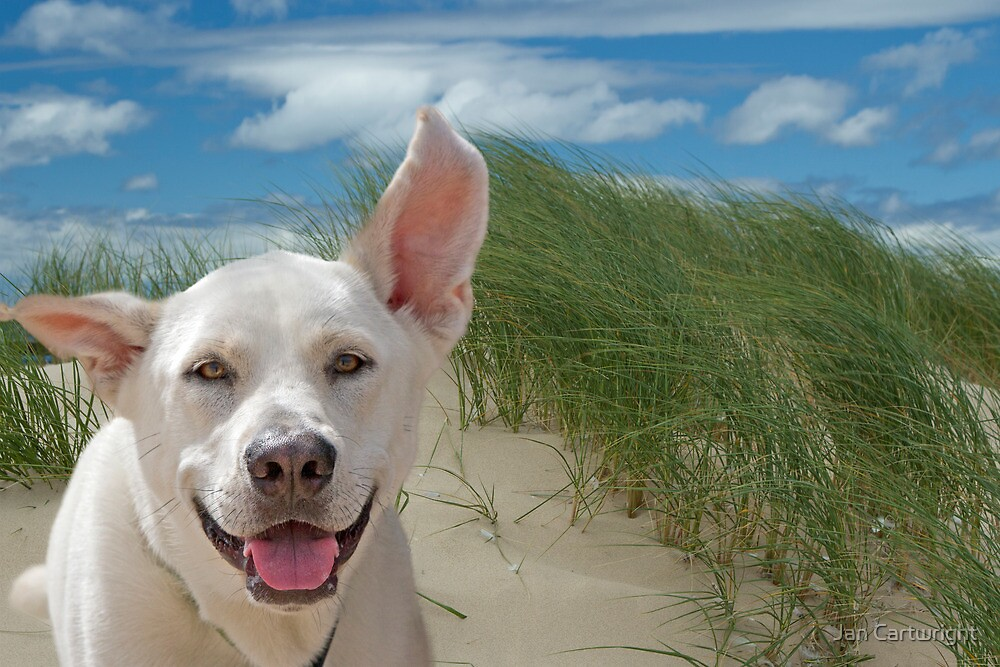 Beach Dog by Jan Cartwright