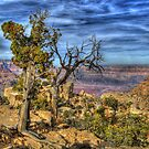 The Scenic Grand Canyon by K D Graves Photography