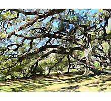 City Park Oaks Photographic Print