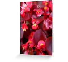 Ruby Begonia Greeting Card