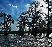 Windswept Bayou by cclaude