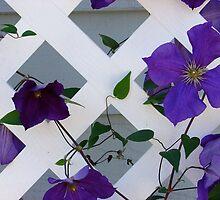 Purple on Lattice by Jane Jenkins