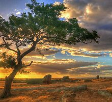 Dog Rocks Tree by Danielle  Miner
