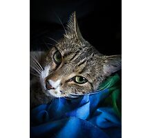 Hamish Photographic Print
