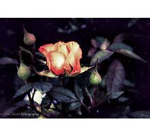 Rose From Darkness Photographic Print