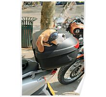 Dog on a Motorbike Poster
