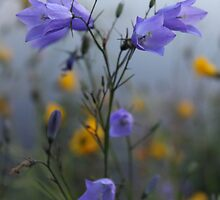 Twilight bluebells and buttercups by VivianW