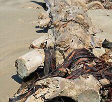 Moeraki Beach, New Zealand by DRWilliams