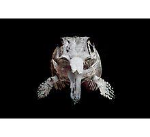 Ophthalmosaurus Photographic Print