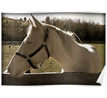 Albino Horse and Fence Rail equine photography Poster