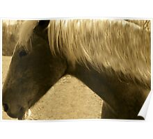 Horse in Sepia brown horse blond mane equine photography Poster