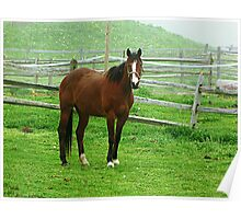 Horse Looking at You, Kid equine photography Poster