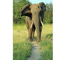 An African Bull Elephant Photographic Print